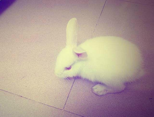 兔子怎么看是公的还是母的图片
