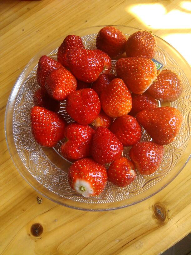 【手机拍萌照,宝宝贺新春】小猪摘草莓