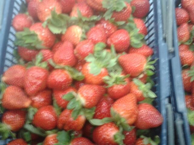西丽现摘新鲜草莓园