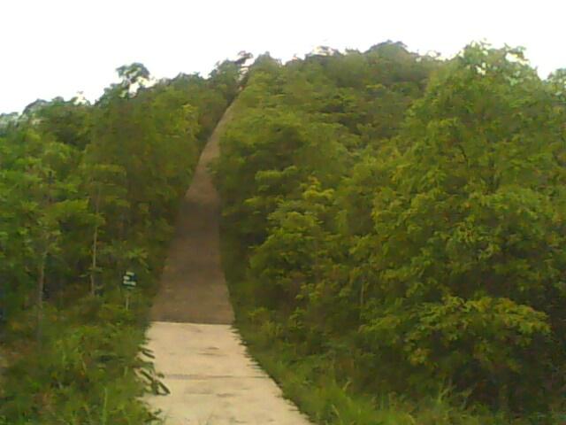 清林径森林公园; > 《精彩图文:我在清林径公园的一天!