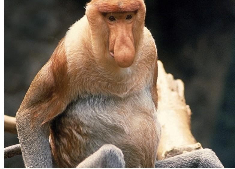 世界最丑陋的动物:中国冠毛犬屡获选丑冠军