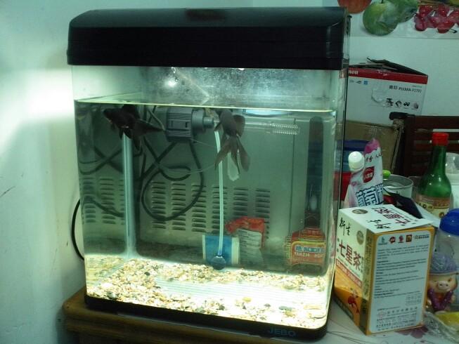 佳宝小鱼缸,40公分宽的