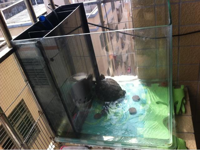 转让测滤鱼缸加龟蓝水泵130