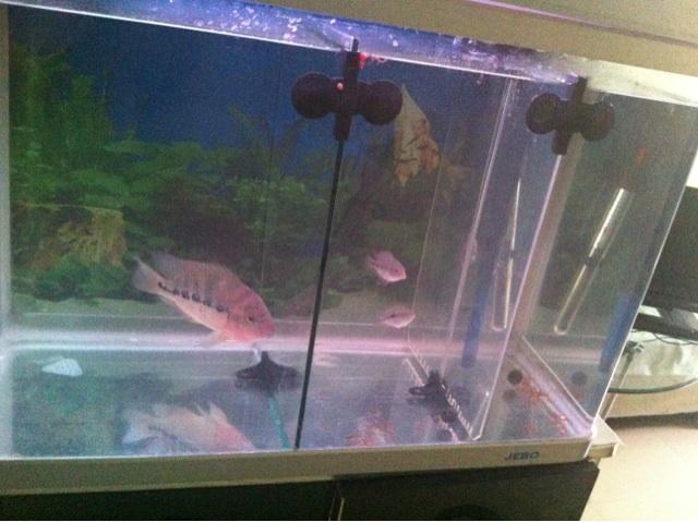 鱼缸氧气使用方法图解