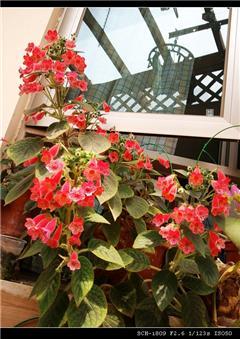 【花草显摆】我家的阳台